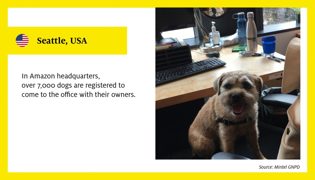 In Amazon headquarters, over 7,000 dogs are registered to come to the office with their owners.