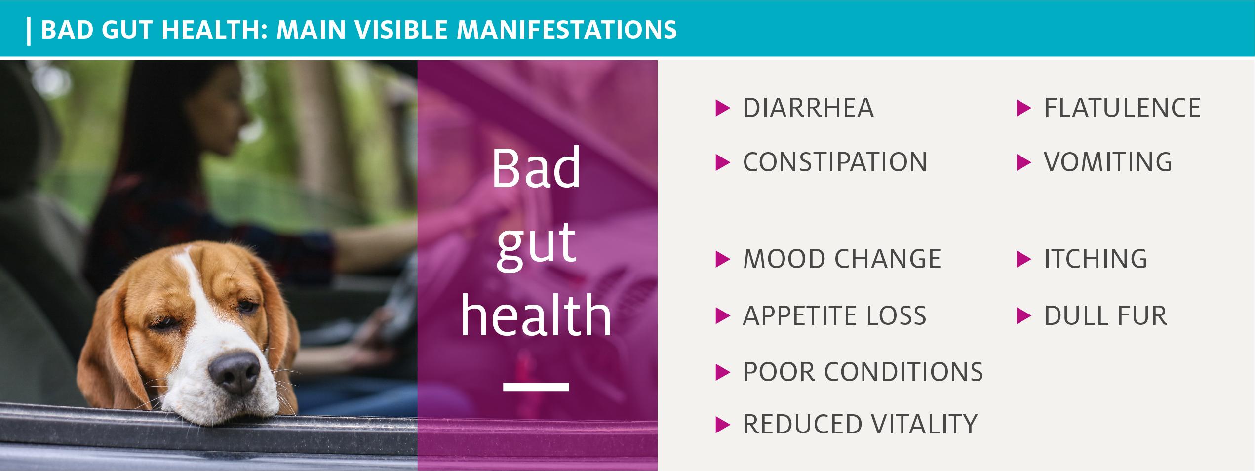 Main manifestations of bad gut health