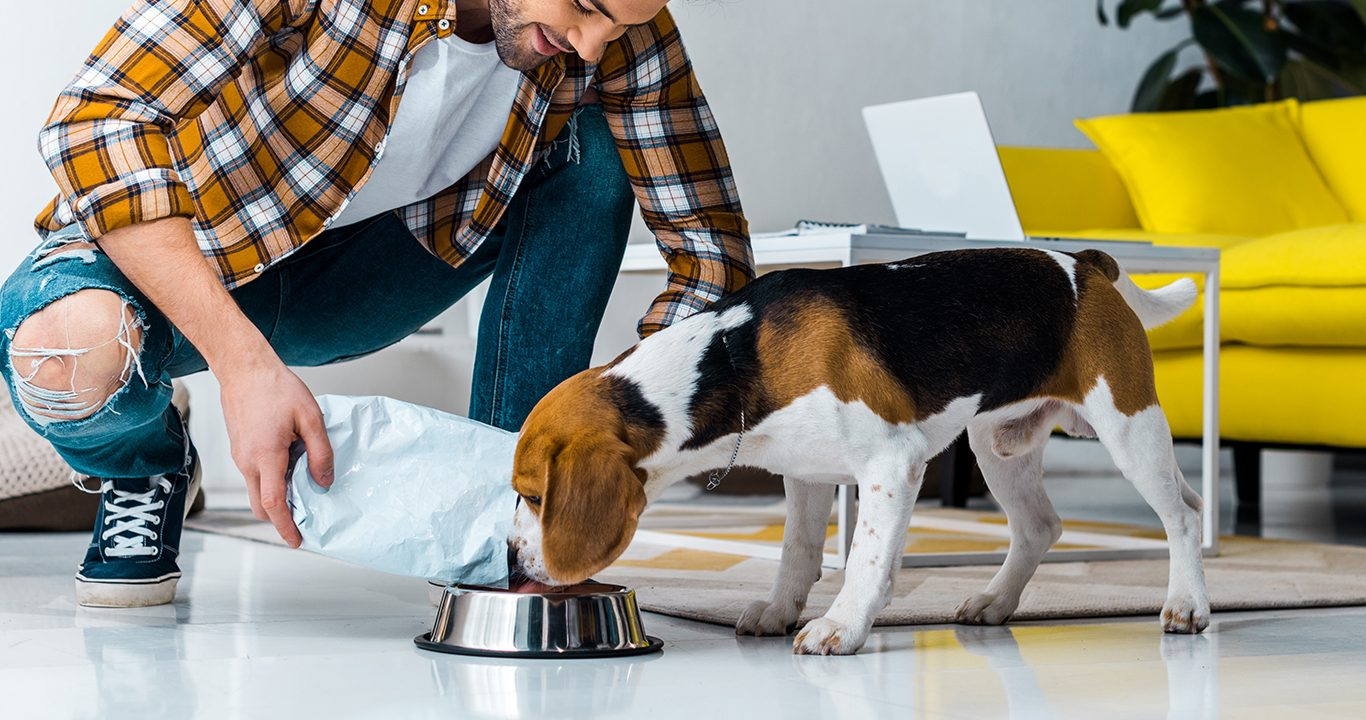 From digestion to immunity, why yeasts improve pet health