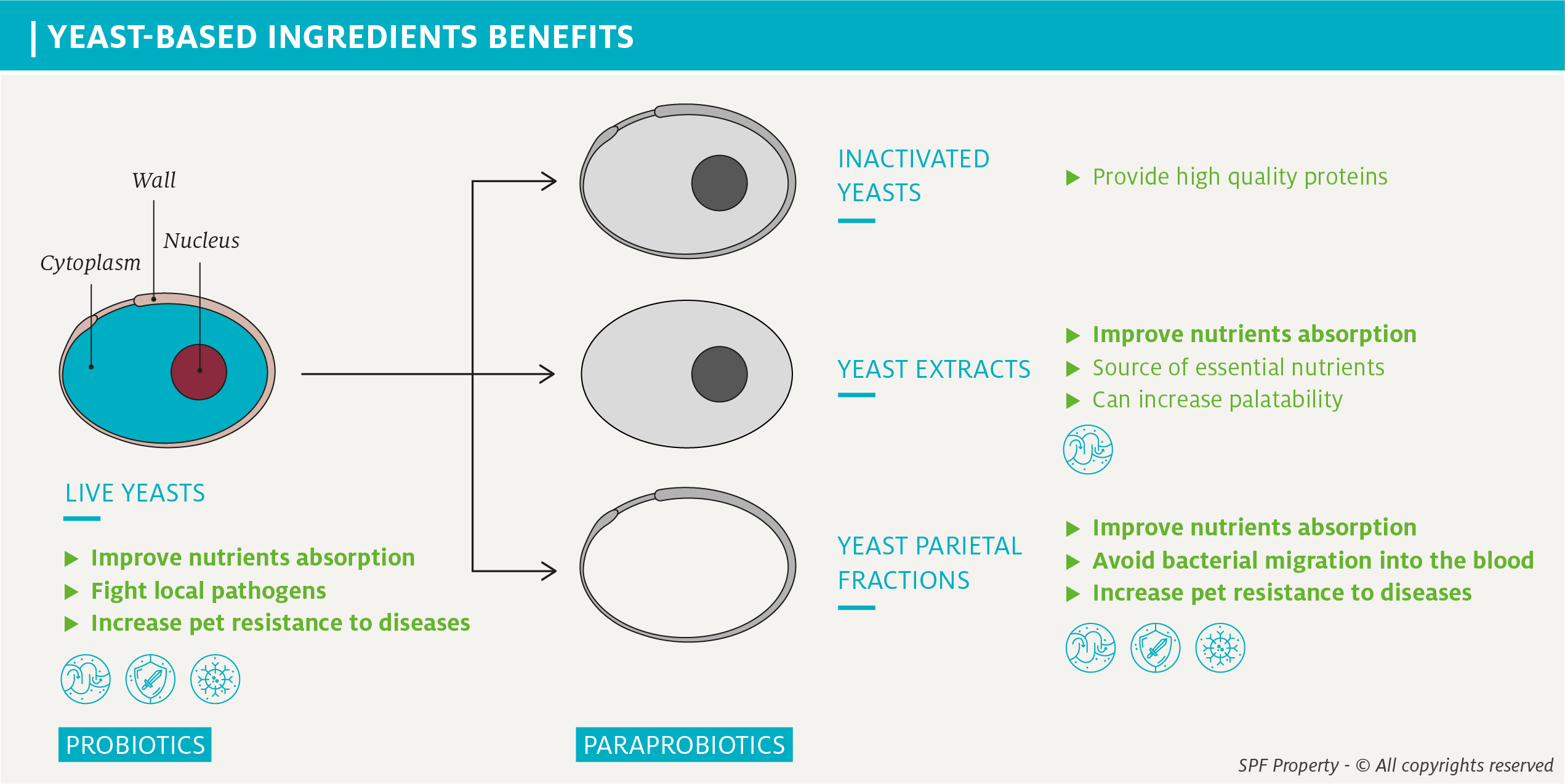 Yeast-based ingredients: from live yeasts to yeast wall fractions