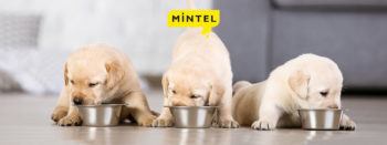 Discover which pet food products stood out in 2020 and find out worldwide innovation opportunities