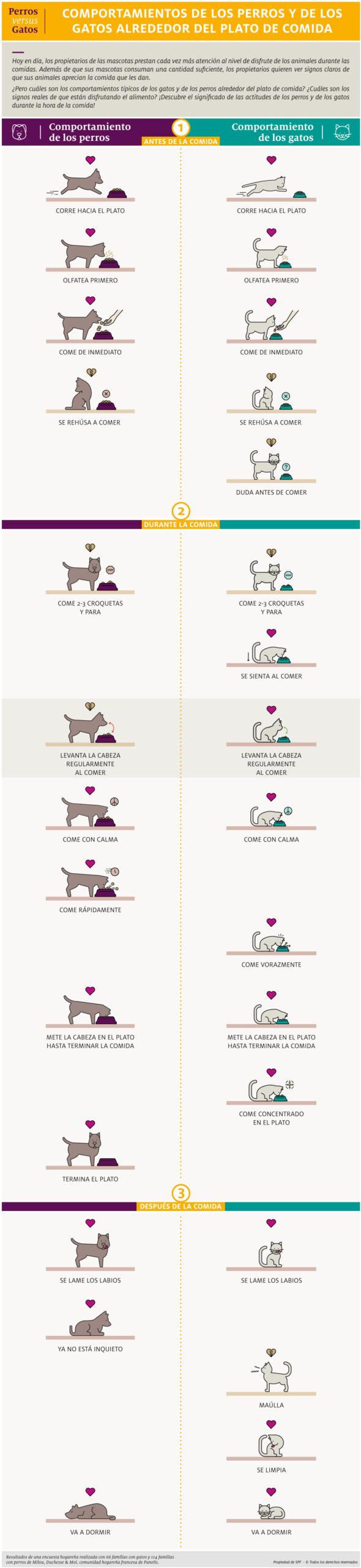los secretos detrás de las actitudes de los gatos y los perros a la hora de comer